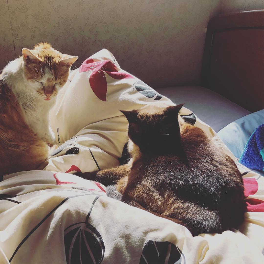 [おはしどころ菜でしこ] うちの愛猫たちです^_^ (関係無いですけど)